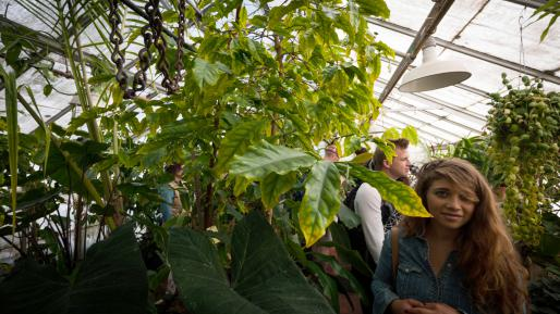 Art walkers with the tropical plants in the Thimann Greenhouse.